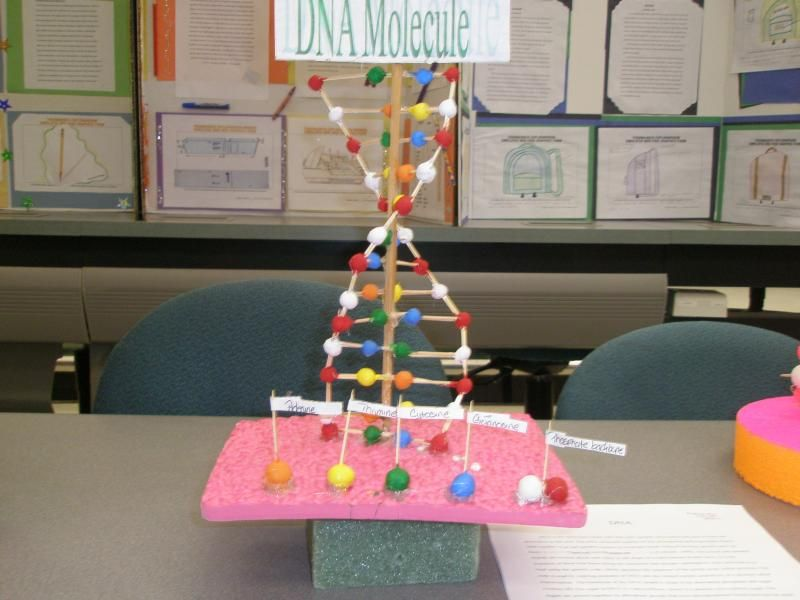 Image Detail For Good Ideas For Making A Dna Model Bodybuilding