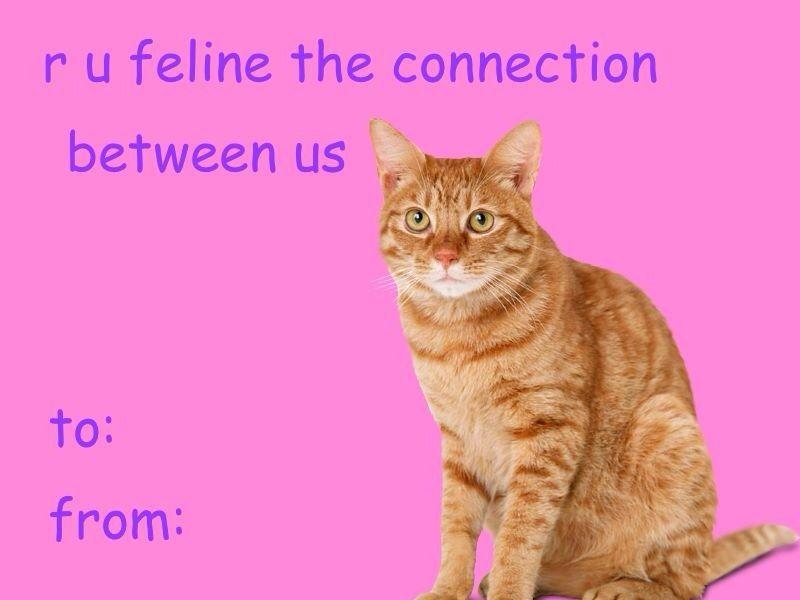 Cat Valentine S Day Card Tumblr Valentines Memes Meme Valentines Cards Funny Valentines Cards
