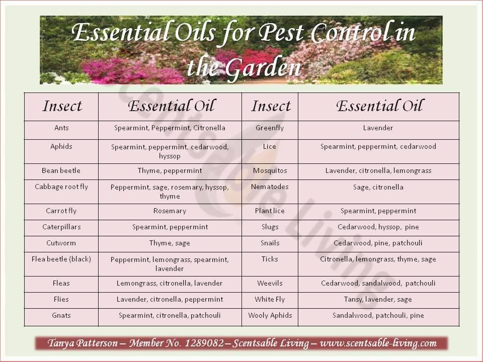 Essential Oils For Pest Control Natural Insect Repellant Garden Insects Garden Pests