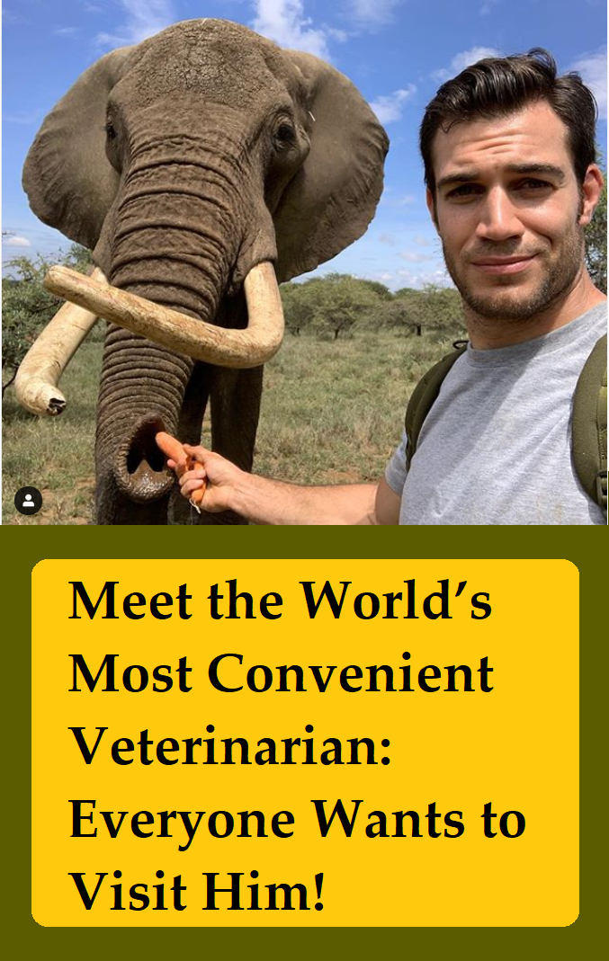 Meet The World S Most Convenient Veterinarian Everyone Wants To Visit Him Veterinarian Animals Beautiful Animal Planet