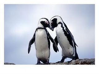 i love penguins so much