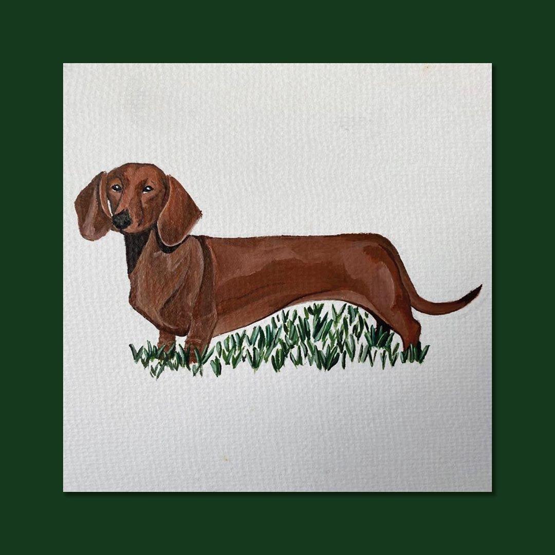 Meet Frankie my Nannas dog: Hes very needy  .... #dog #dogsofinstagram #dogs #puppy #dogstagram #instadog #pet #doglover #love #dogoftheday #cute #doglovers #instagram #pets #of #puppylove #doggo #puppies #cat #doglife #puppiesofinstagram #ilovemydog #dogsofinsta #animals #hund #doggy #petstagram #k #animal