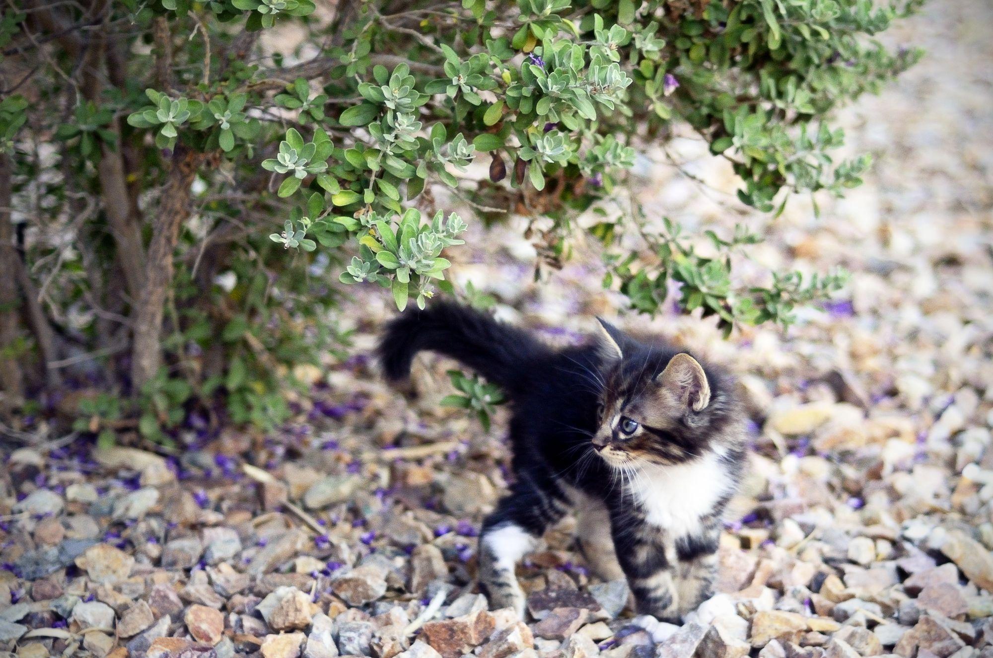 #animals #pets #cats #kitten Photo Credit - Pigeonfoot Photography www.pigeonfoot.com