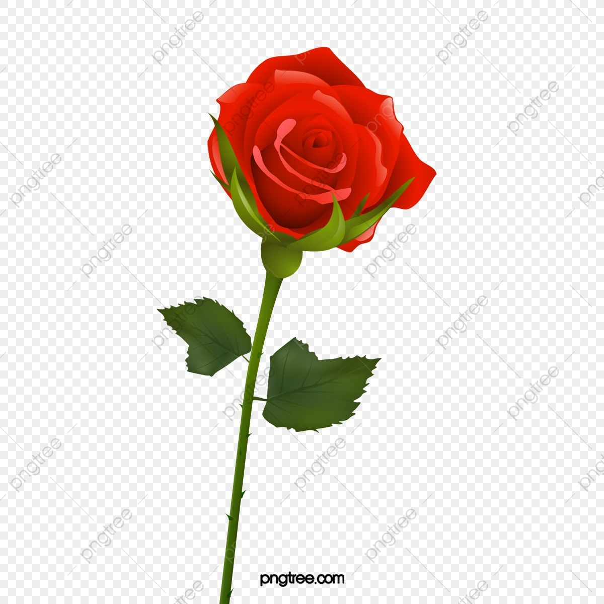 A Rose With Thorns Barbed Flowers Rose Png Transparent Clipart Image And Psd File For Free Download Rose Clipart Rose Thorns Rose