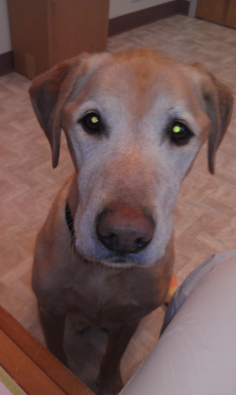 Adopt Jack On Petfinder Senior Dog Dog Adoption Pet Dogs