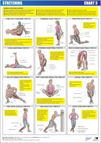 stretch chart 3  lower body  stretching exercises