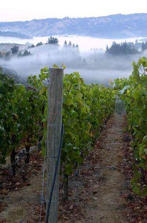 Sea View Ridge Vineyard - Flowers Vineyard & Winery