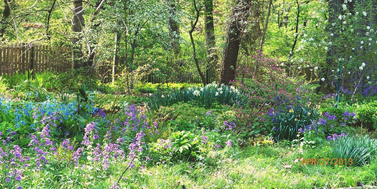 Ideas for small woodland gardens wissahickon schist the for Woodland shade garden designs