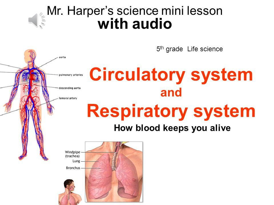 Respiratory system diagram grade 3 image collections how to guide respiratory system diagram grade 3 image collections how to guide and refrence ccuart Gallery