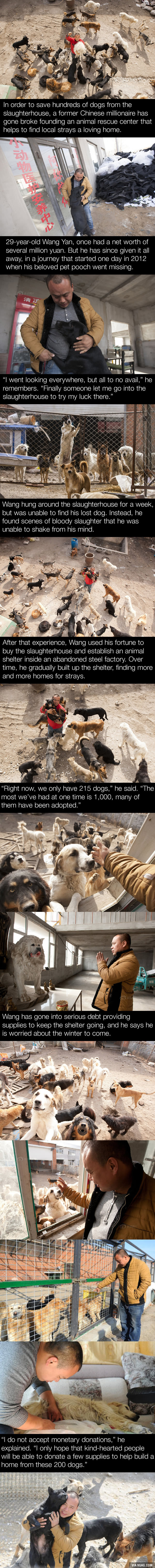 Former millionaire in China goes into debt rescuing thousands of stray dogs