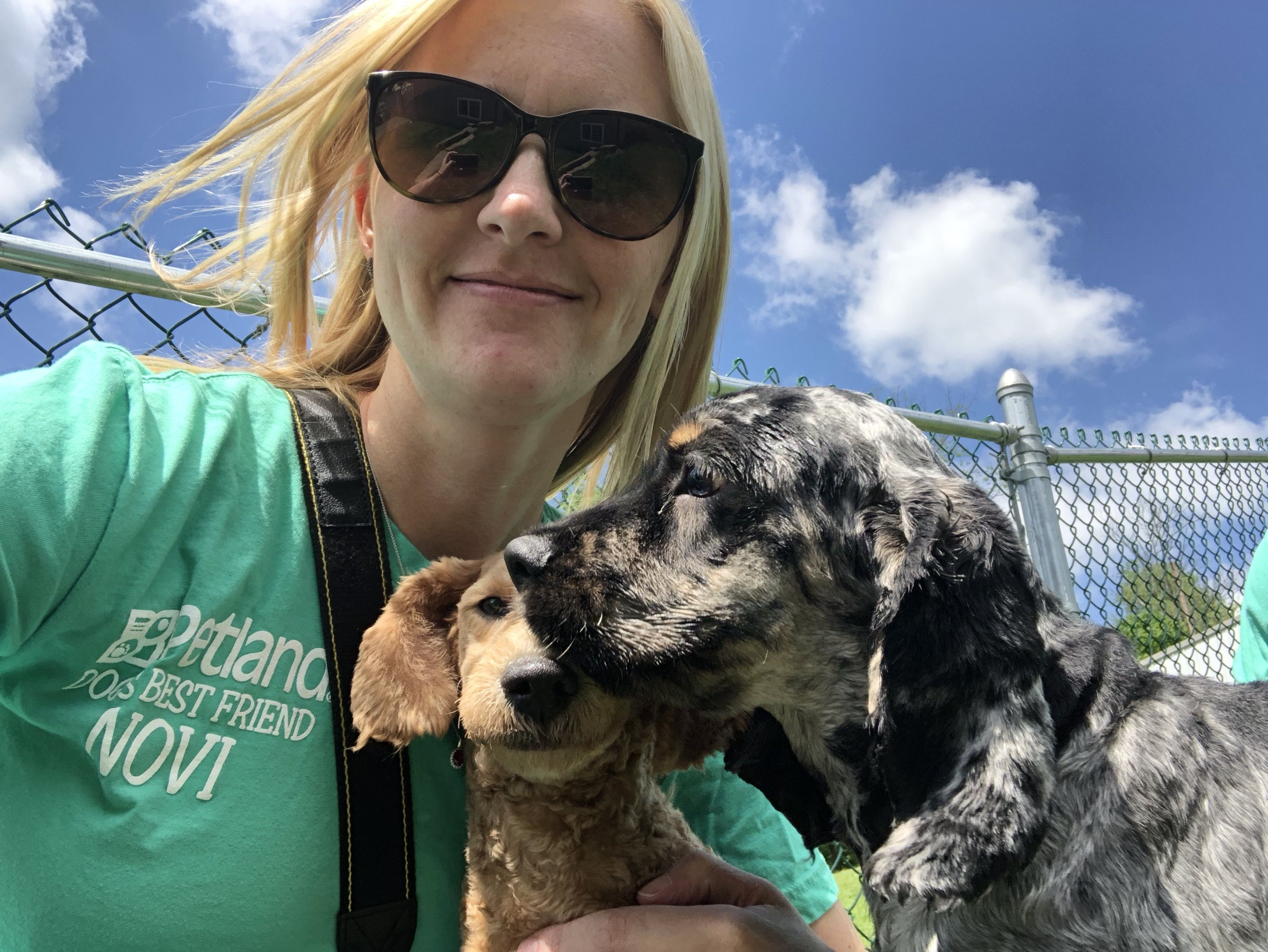 Breeder Dogs Puppy Store Puppies For Sale Puppies