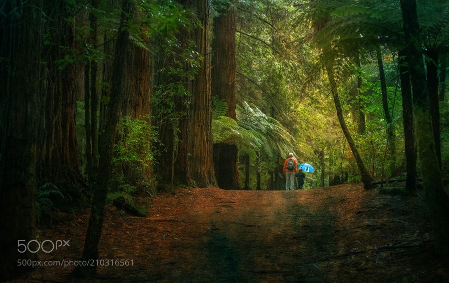 Forest walk by elkynz from http://500px.com/photo/210316561 - A grandfather walked with his grandson in the Redwood Forest of Rotorua in New Zealand. More on dokonow.com.