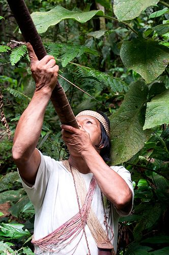 The traditional Huaorani way of hunting - with a blowgun