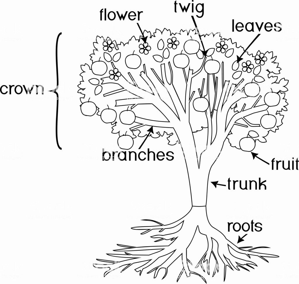 32 Parts Of A Flower Coloring Page Flower Coloring Pages Parts