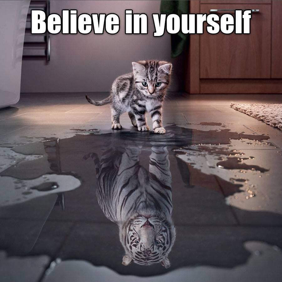 Image result for believe in yourself kitten meme