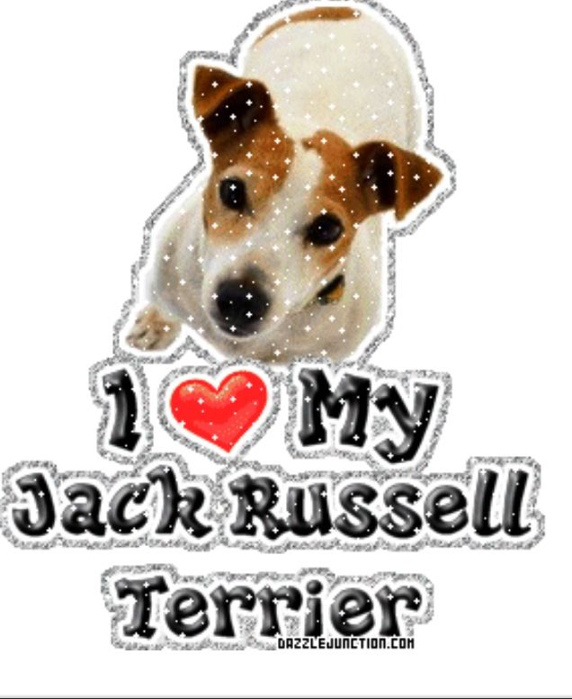 sticker pet animal breed puppy terrier I love my JACK RUSSELL dog heart decal