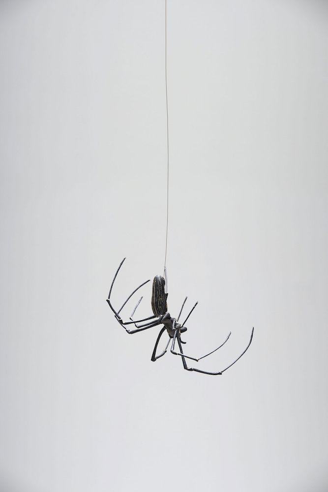 不気味だけど不思議で気になる 蜘蛛の糸 に着目した展覧会 蜘蛛の糸