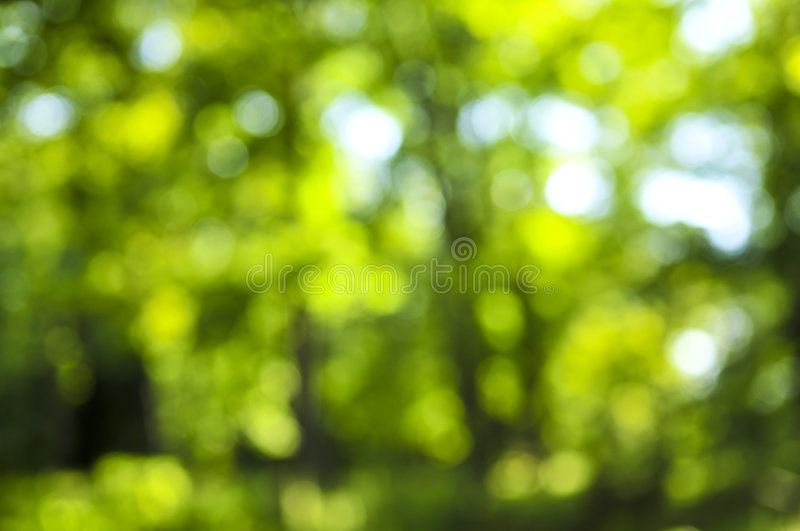 Green Background Green Natural Background Of Out Of Focus Forest Or Bokeh Affiliate Natural Background Green Backgrounds Natural Background Background