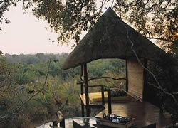 Tree house hotel in South Africa
