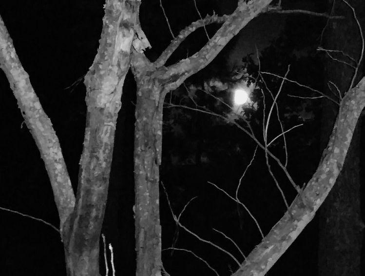 Moon Beyond. Photograph.