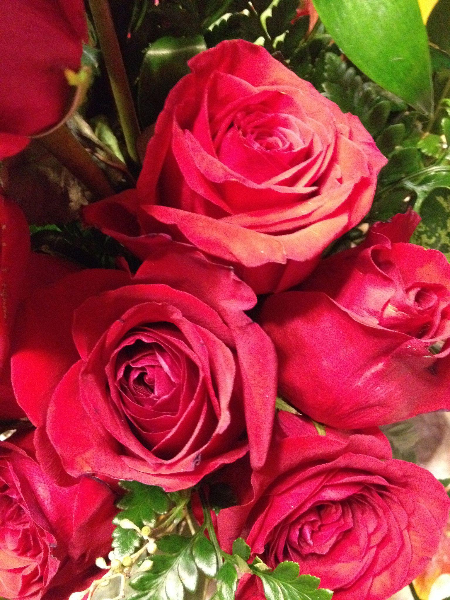 https://flic.kr/p/EeHzip | Valentine Roses [4] | Valentine's Day 2016