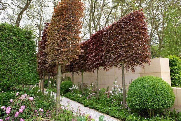 Garden Design Inspiring Ideas Rhs Gardening Garden Design Patio Trees Garden
