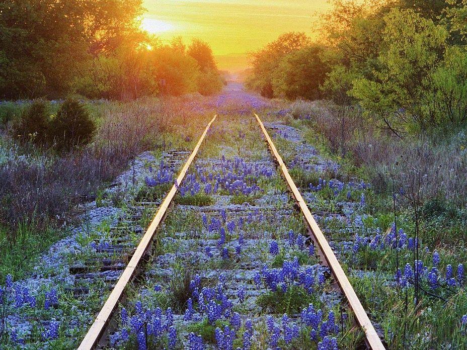 нас поезд весной в картинках для считается