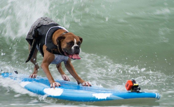 22 Amazing Surfing Dogs From This Year's SurfDog Competition!