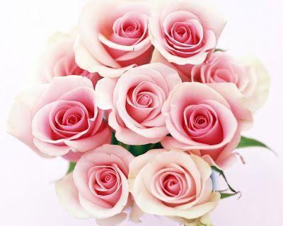 Luz Suave: Rosa