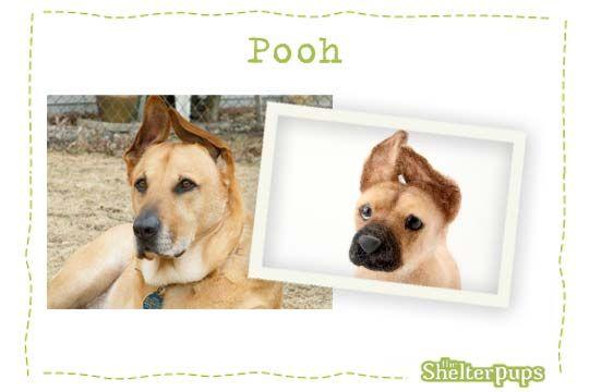 Samples Of Our Custom Stuffed Dogs Embrace Pet Insurance Plush Dog Best Pet Insurance