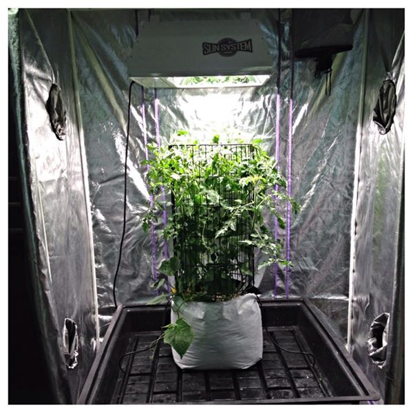Great Picture From Urban Roots Garden Supply Of Our NEW Sun System LEC 315!  If