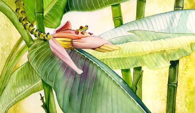 frog, banana tree