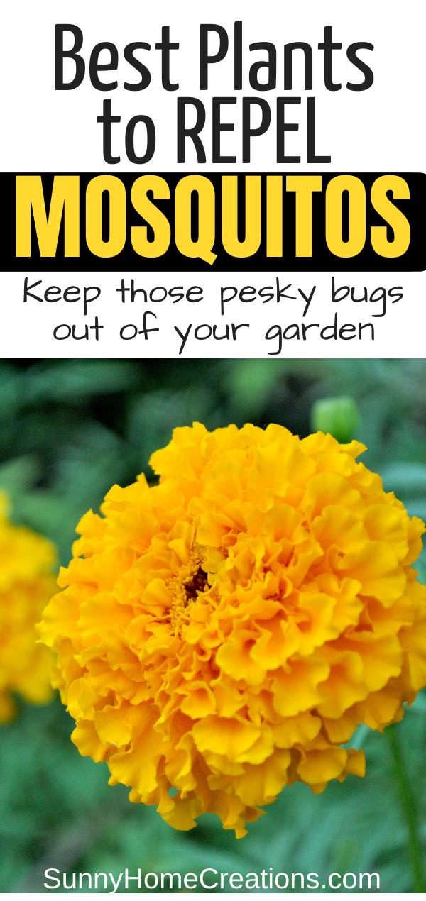 13 Best Mosquito Repellent Plants – Potted plants patio