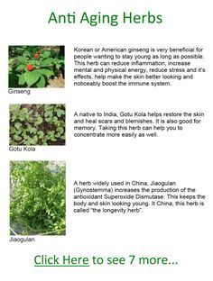 Top 10 Anti-Aging Herbs - If you would like to look and feel a little younger, there are some herbs that just may help you do that.
