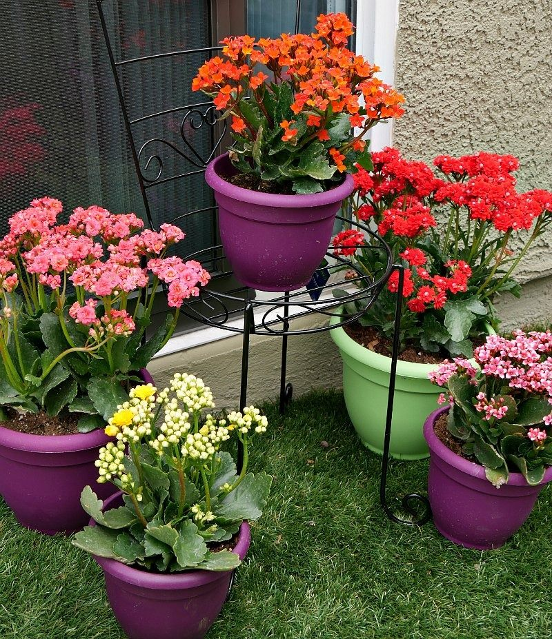 Group colorful planters at varying heights to create visual ... on backyard urn ideas, backyard patio ideas, cheap retaining wall ideas, backyard rose ideas, diy flower garden design ideas, backyard fence ideas, backyard gift ideas, tropical landscape patio design ideas, backyard outdoor ideas, backyard wood ideas, backyard landscaping ideas, back yard landscaping design ideas, backyard shelf ideas, small backyard ideas, outdoor flower pot decorating ideas, backyard plant ideas, backyard statue ideas, backyard bed ideas, backyard light ideas, backyard flowers ideas,