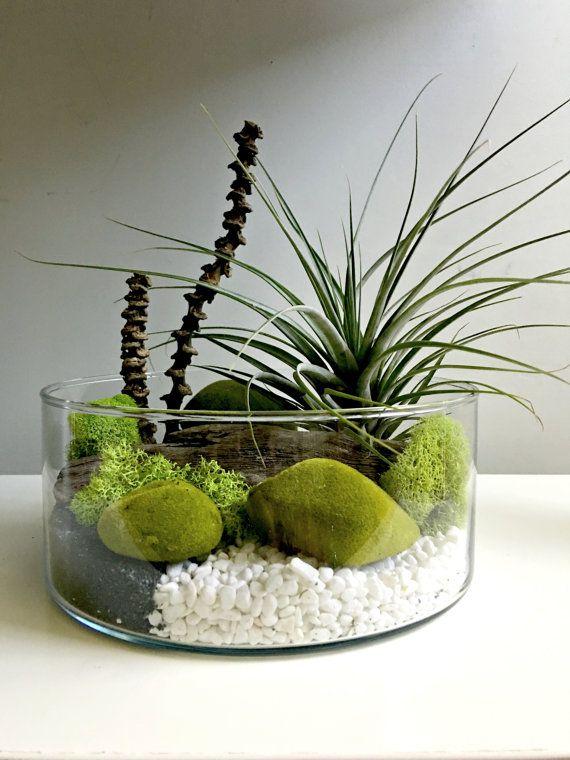 Large Air Plant Terrarium Gl Vase Living By Omorfigiadesigns