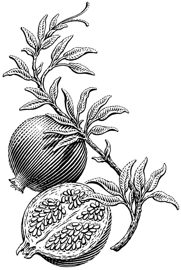 Pin on Illustration