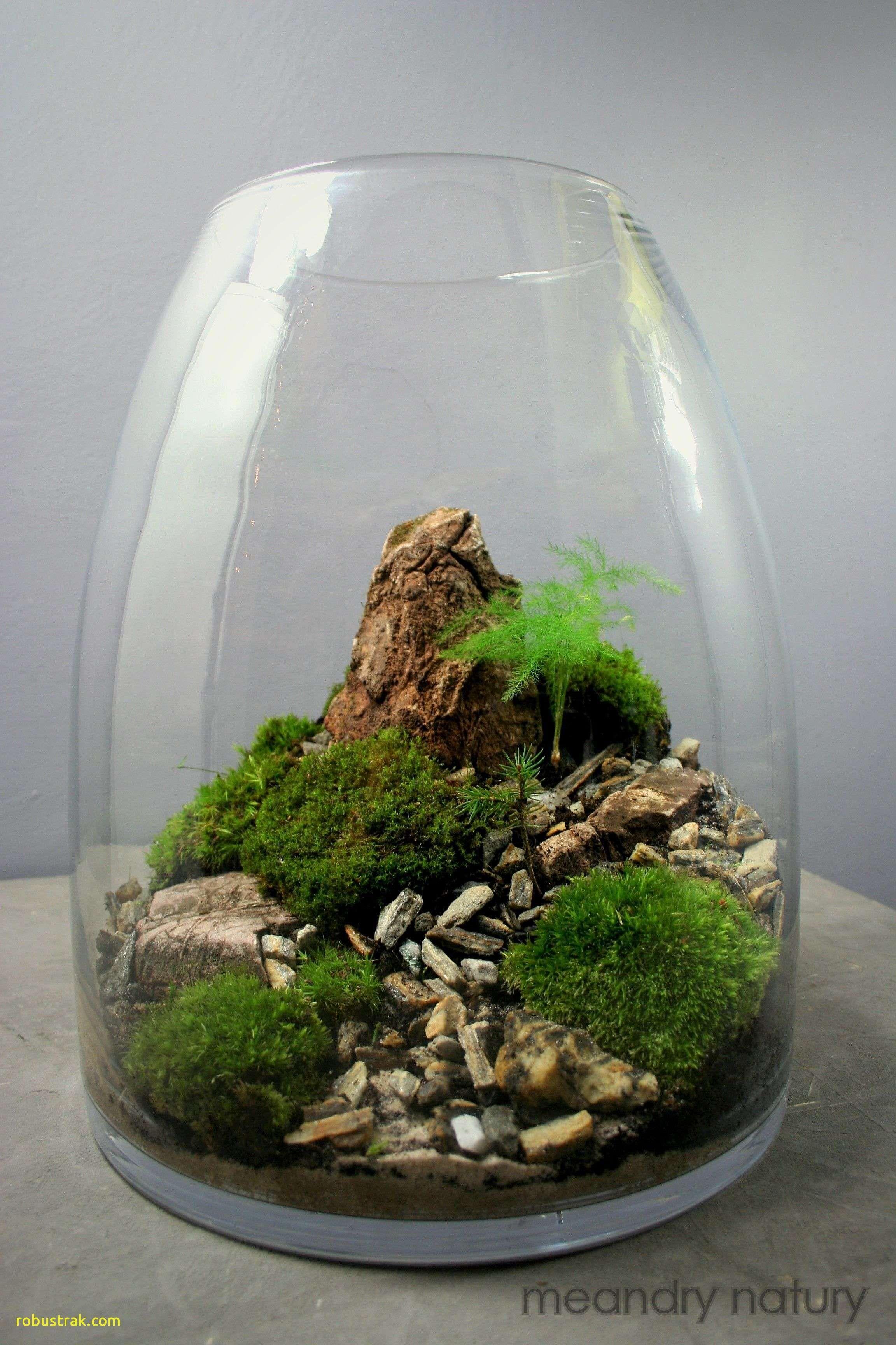 Best Of Air Plants Terrarium, homedecoration