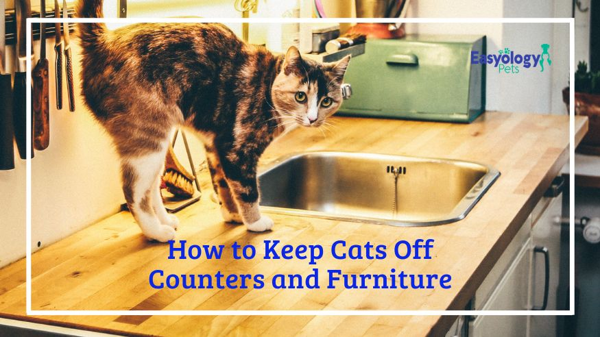 How to Keep Cats Off Counters and Furniture First time