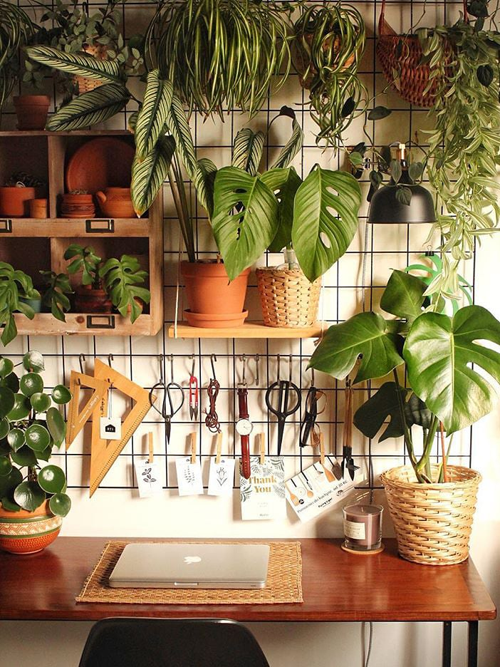 How to Care for Monstera Adansonii Plants Indoors -   17 planting Indoor desk ideas