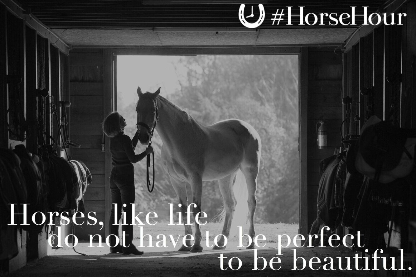 """Horses, like life, do not have to be perfect to be"