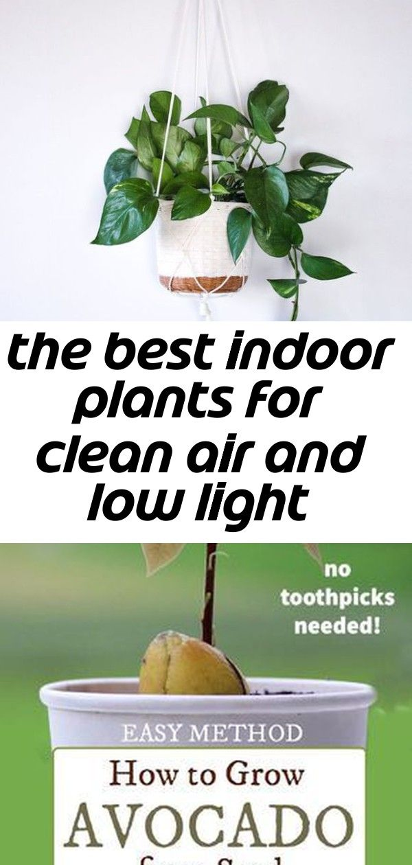 The Best Indoor Plants for Clean Air And Low Light ...