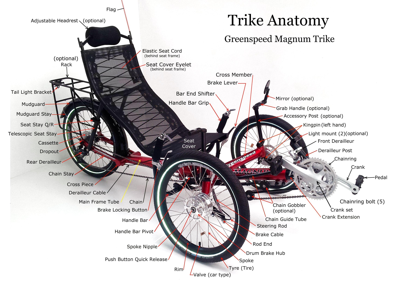 Anatomy | Liegerad und Fahrräder