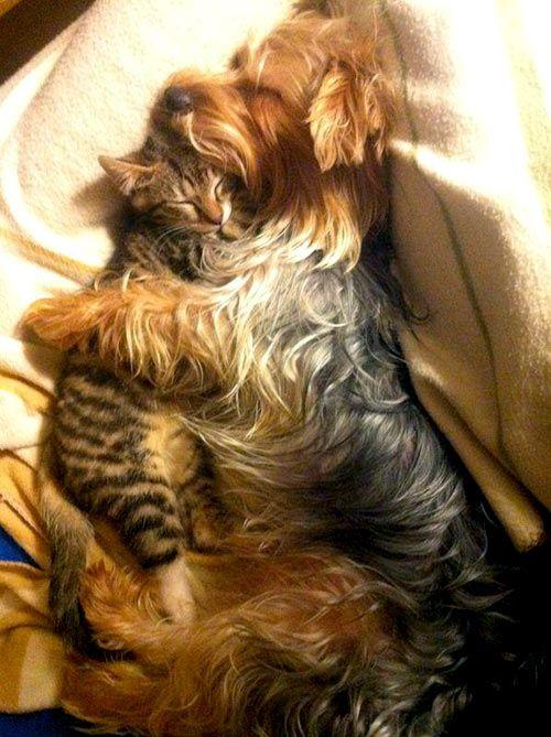 Cuddle Buddies via LoveMeow ~ Sweet Dreams beautiful friends♥