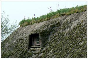 Les iris sur les toits de chaume en Normandie | Toit de chaume, Toit,  Architecture intérieure