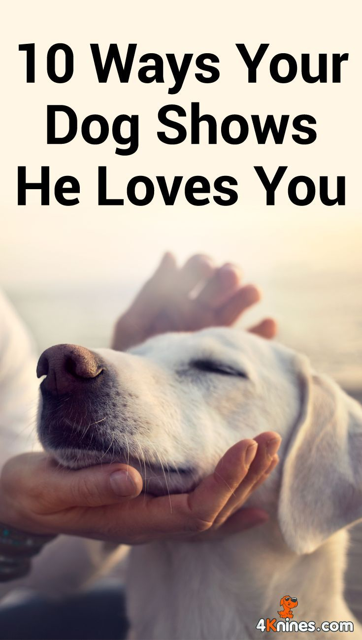10 Ways Your Dog Shows He Loves You Dogs Dog Show Dog Insurance
