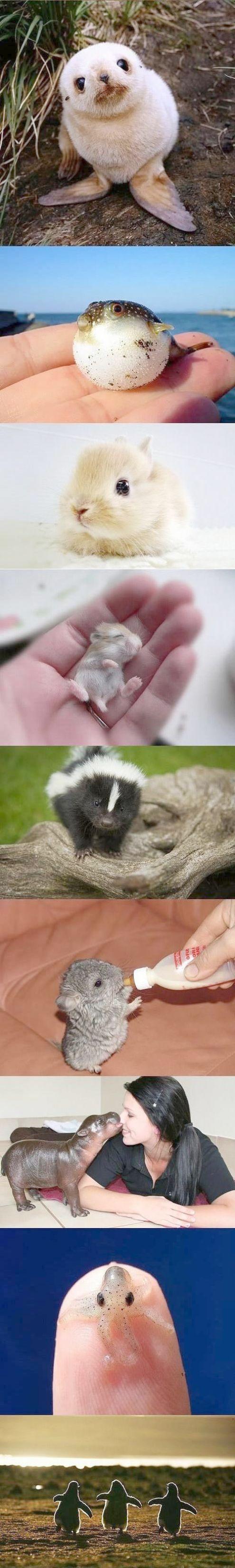 Stunning >> How To Draw Cute Baby Animals Dragoart google