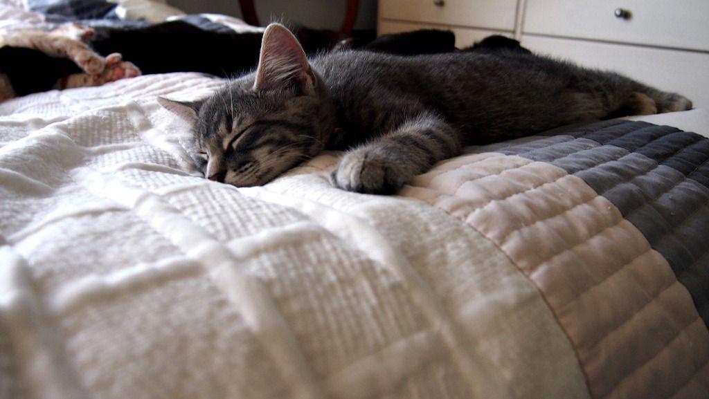 주말엔 게으른 고양이들.... 하지만 주중이라고 부지런하진 않죠 | Daum 루리웹
