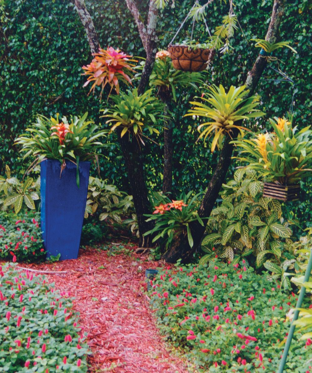 a blue planter graces this tropical palm beach county landscape  bromeliads grow in the trees