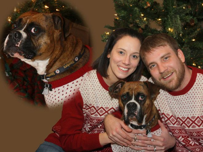 20 Super Awkward Funny Christmas Portraits With Pets Don T Miss
